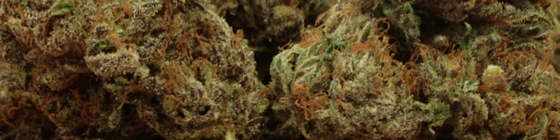 Hybrid Cannabis Portland OR