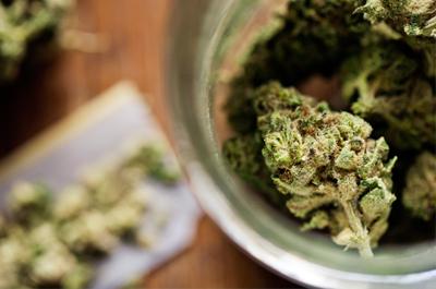 Hybrid Cannabis Portland