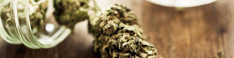 Cannabis Portland OR